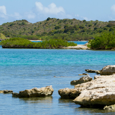 Mangroves - Antigua